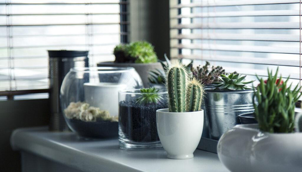 Vase Plant Gardening
